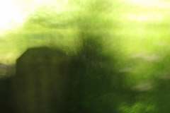 02_flora_(c) Martin Gries