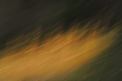 Licht aus Gold 5