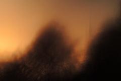 Licht aus Gold 11